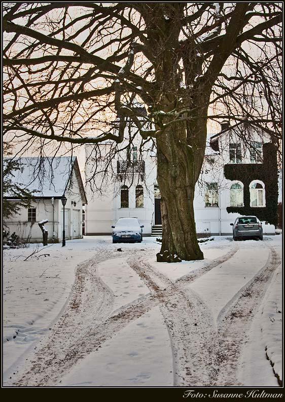 Snö och träd