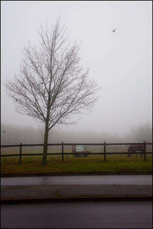 Kalt träd och häst i dimma