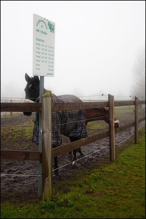 Hästar vid skylt för 4H