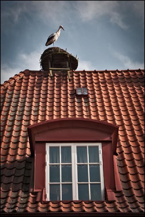 Stork på tak med fönster