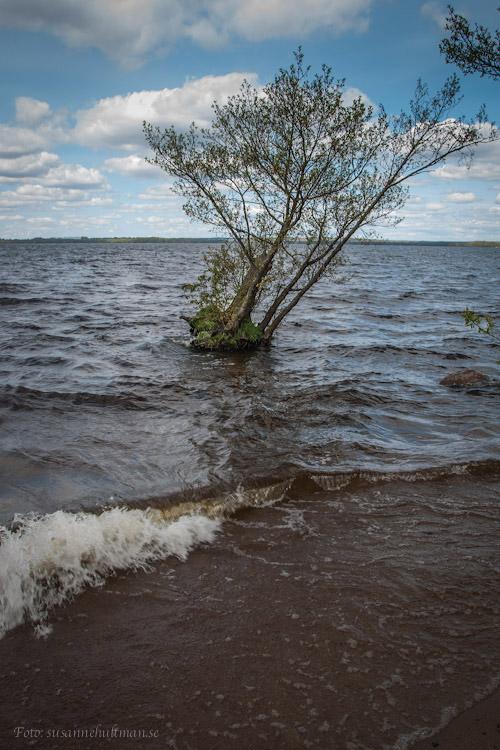 Vågor på Ringsjön