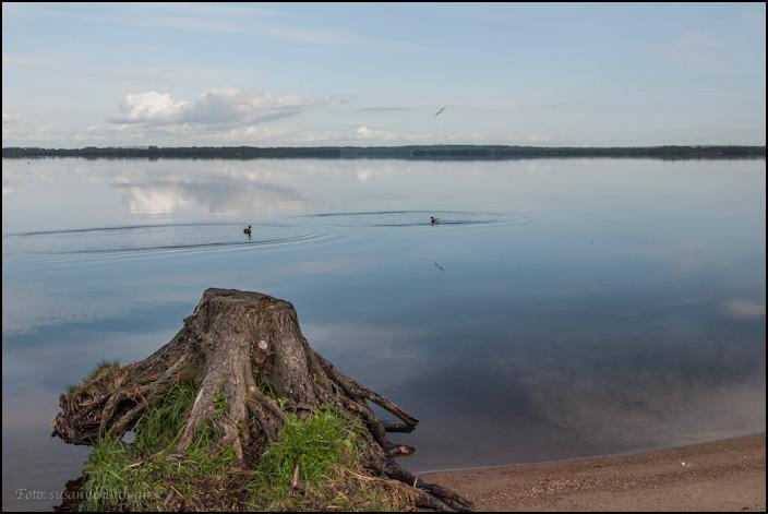 Trädstubbe vid spegelblank vattenyta