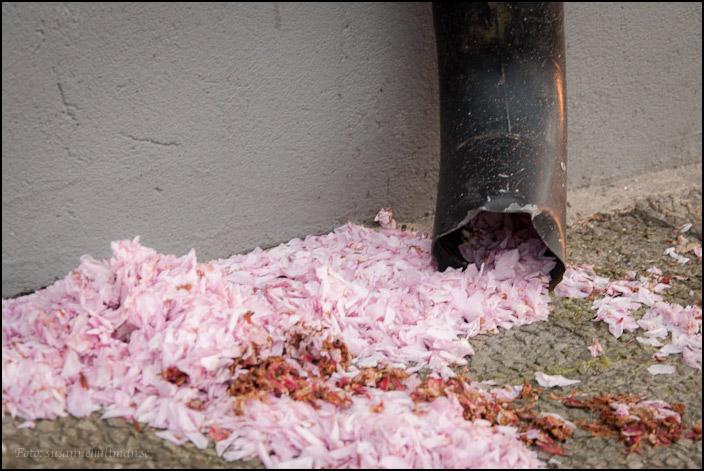 Stuprör med rosa kronblad