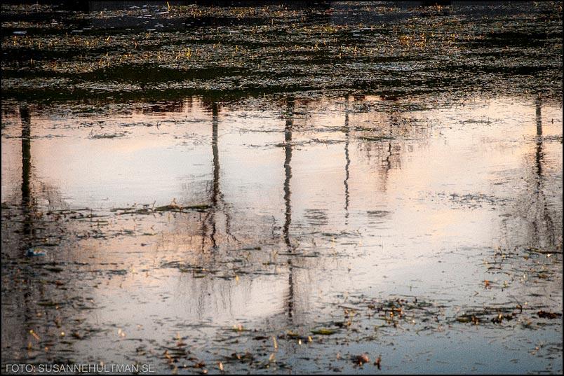 Träd reflekterade i vatten