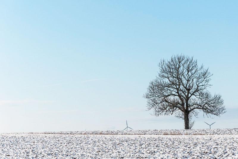 Snöig åker med träd och vindkraftverk