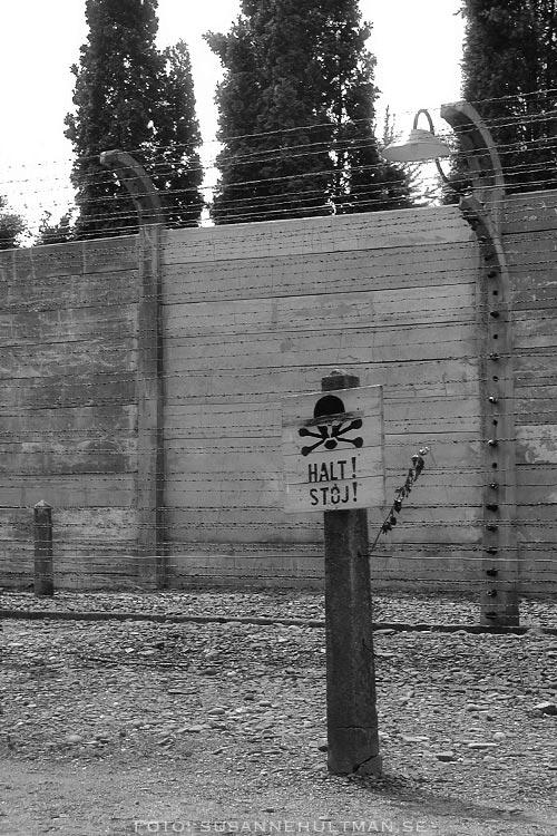 Skylt med texten HALT vid taggtrådsstängsel
