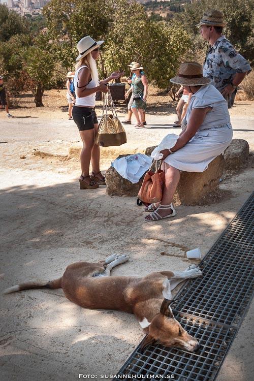 Utmattad hund på marken och i bakgrunden personer med solhattar