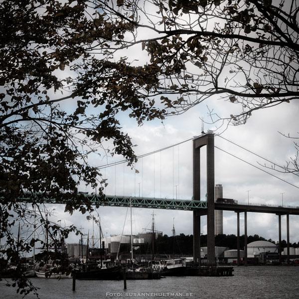 Trädsilhuett vid bro