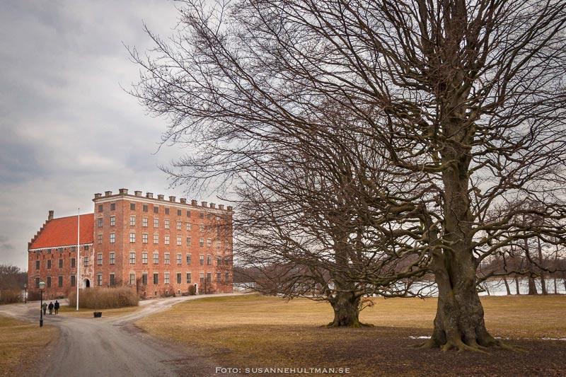 Svaneholms slottsallé med slottet och stora träd