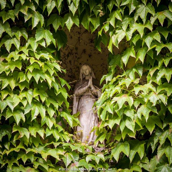 Madonna inramad av vildvinsblad