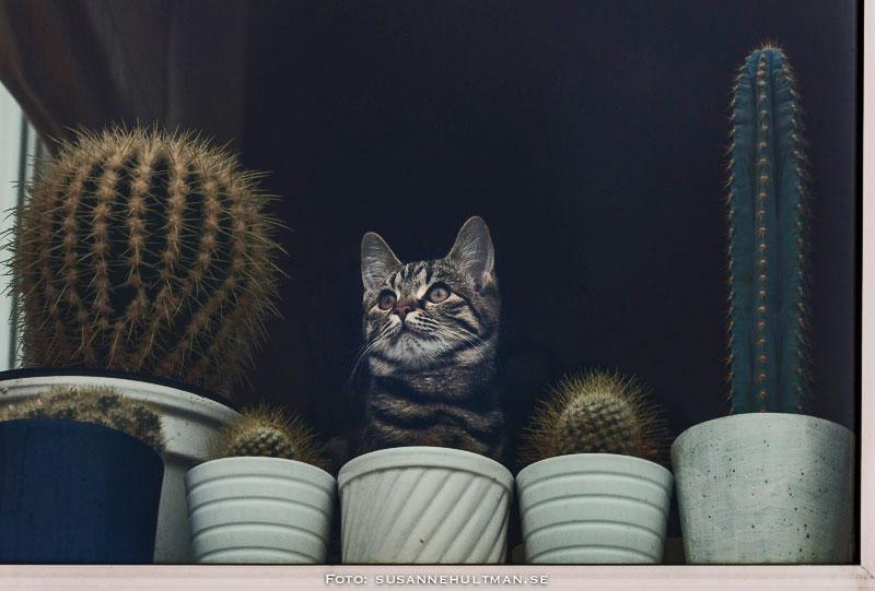 Fönster med katt bland kaktusar