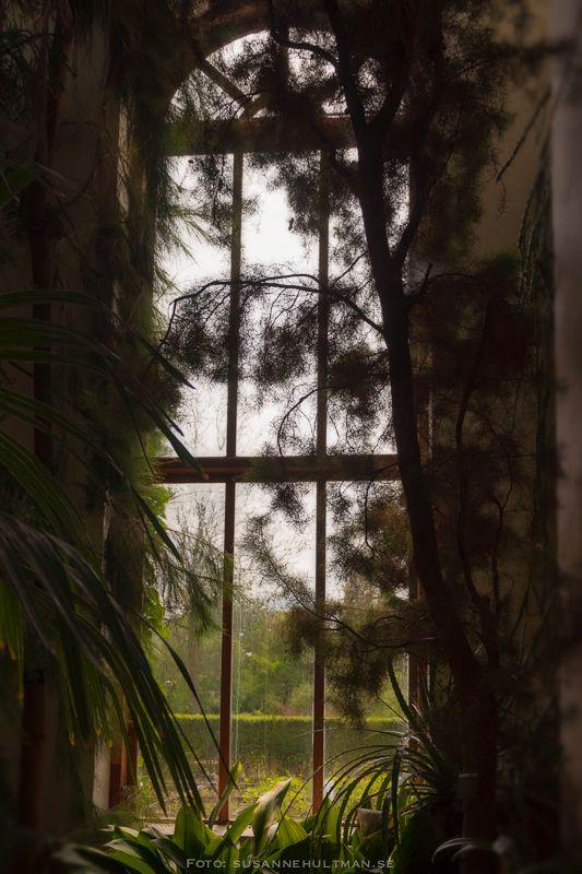 Fönster från växthuset