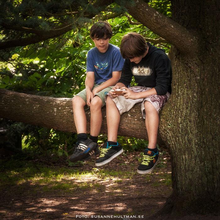 Två pojkar på en trädgren
