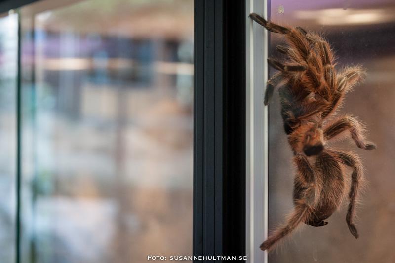 Spindel på fönsterglas