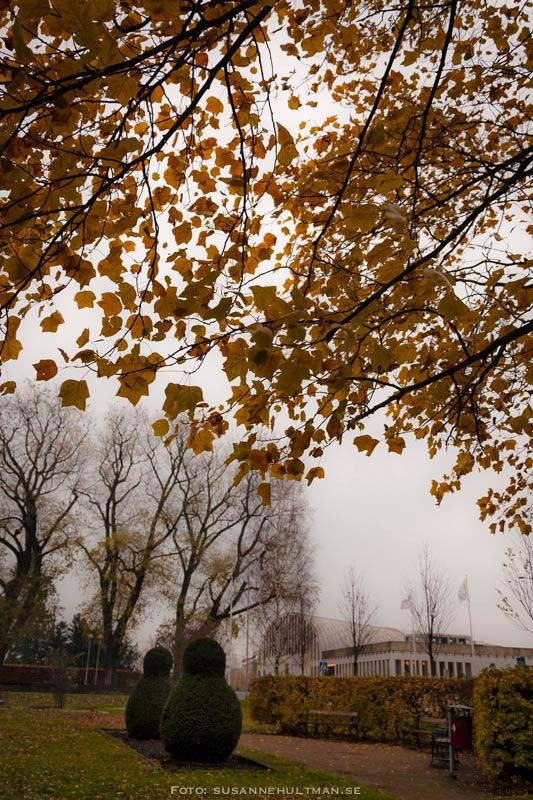 Bruna löv i dimma vid medborgarhuset i Eslöv
