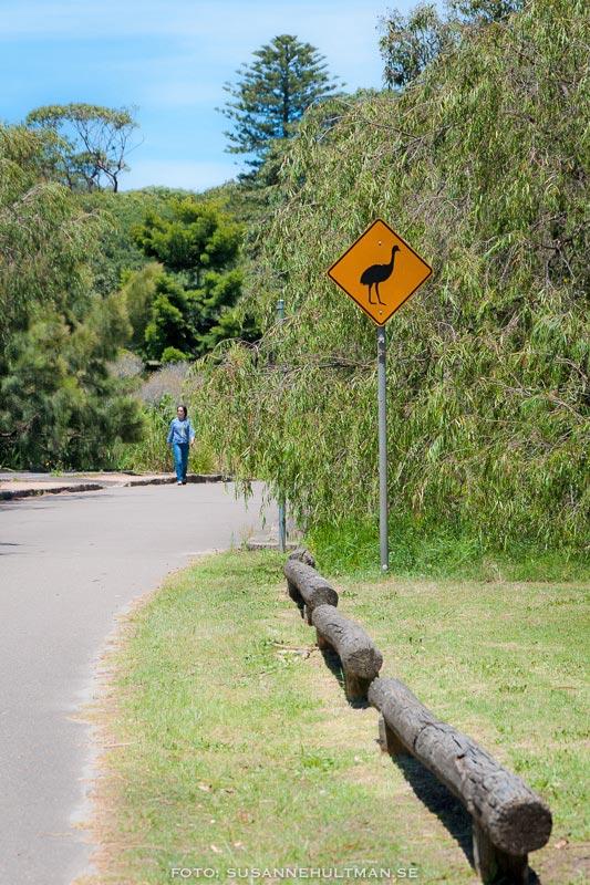 Varningsskylt på promenadväg.