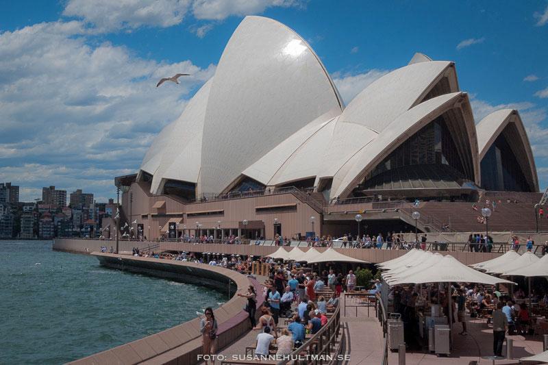 Sydney Opera House från kajen vid Opera Bar