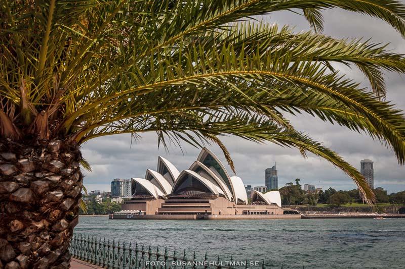 Sydney Opera House från andra sidan bron