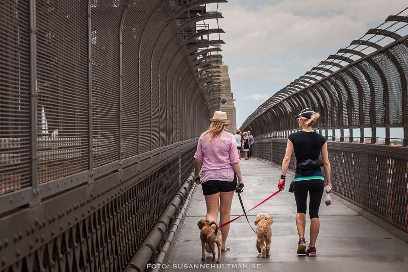 Två flickor med var sin hund.