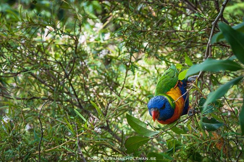 Papegoja utanför zoo.