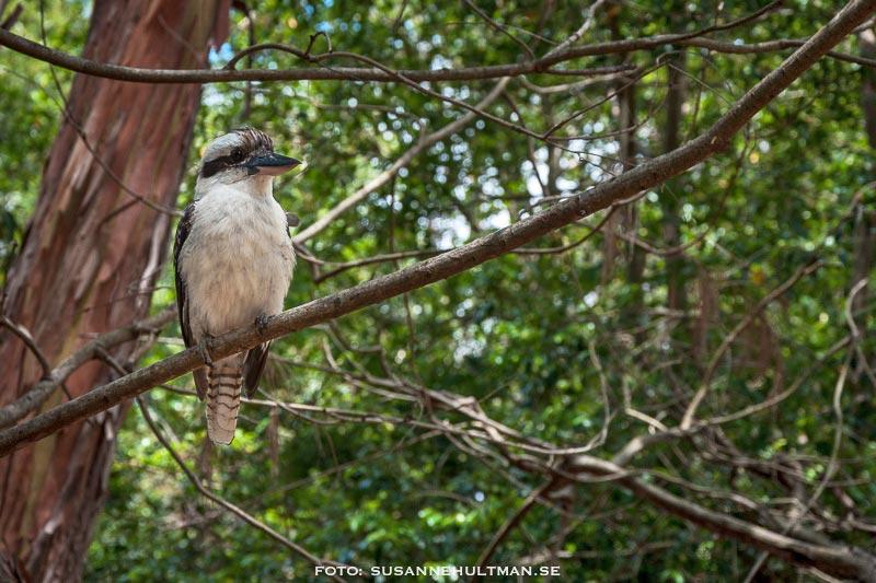Fågel i träd.