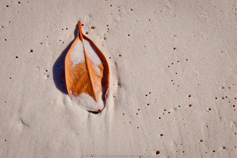 Blad på stranden