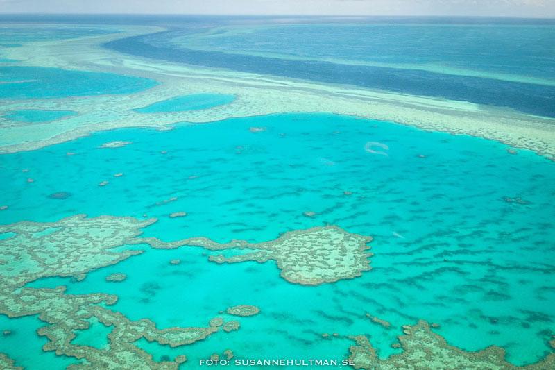 Korallrev från flygplanet