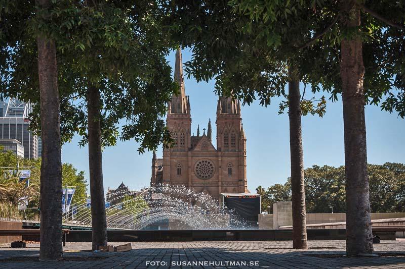 Katedralen mellan träd