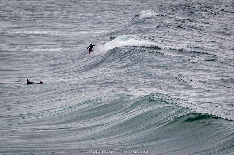 Surfare i vattnet
