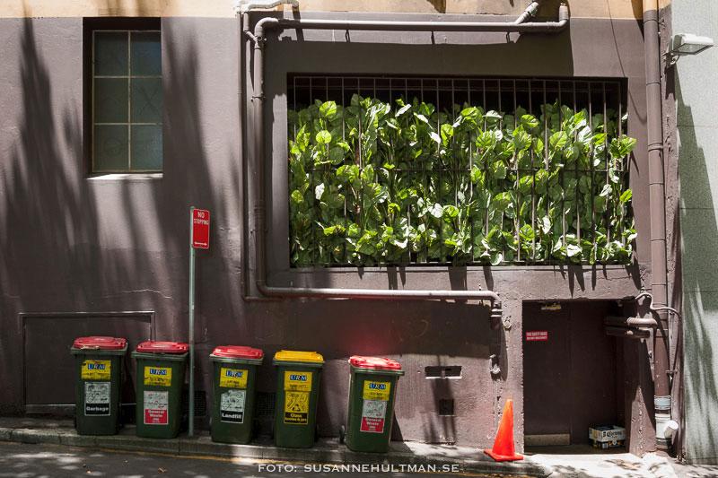 Fönster fullt med växter