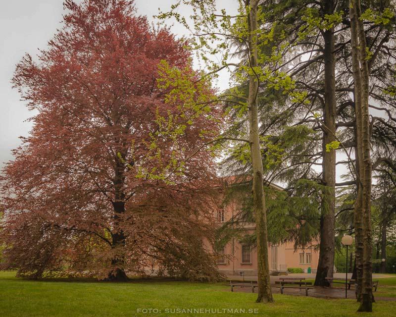 Träd skymmer kommunhuset