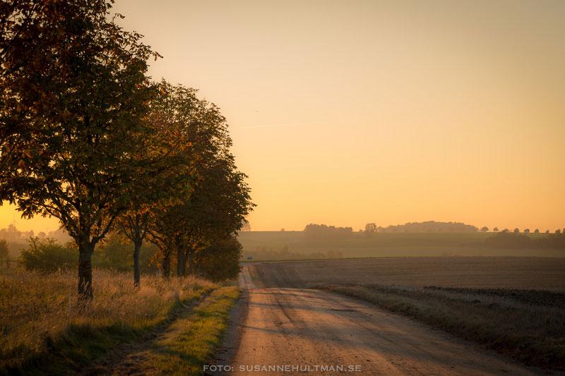 Grusväg i solnedgång