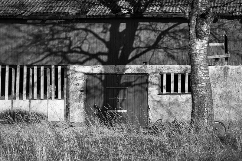 Träd med skugga på vägg