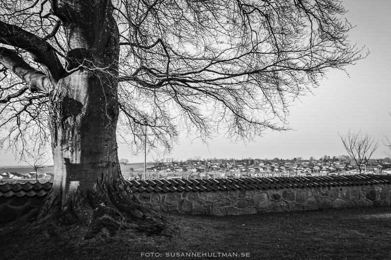 Träd och utsikt över västra Eslöv