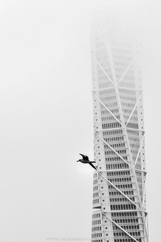 Turning Tors i dimma med fågel