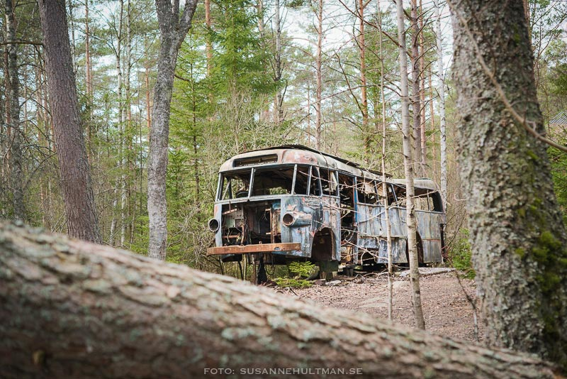 Rostig gammal buss sedd genom trädstammar