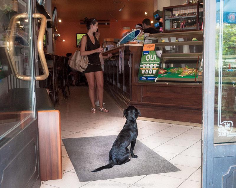Hund på entrémattan väntar på matte vid bardisken