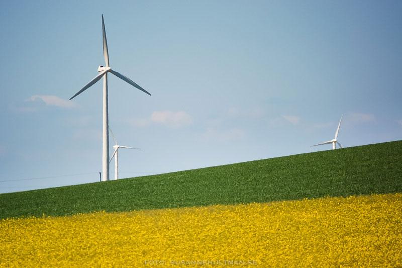 Rapsfält med vindkraftverk och blå himmel