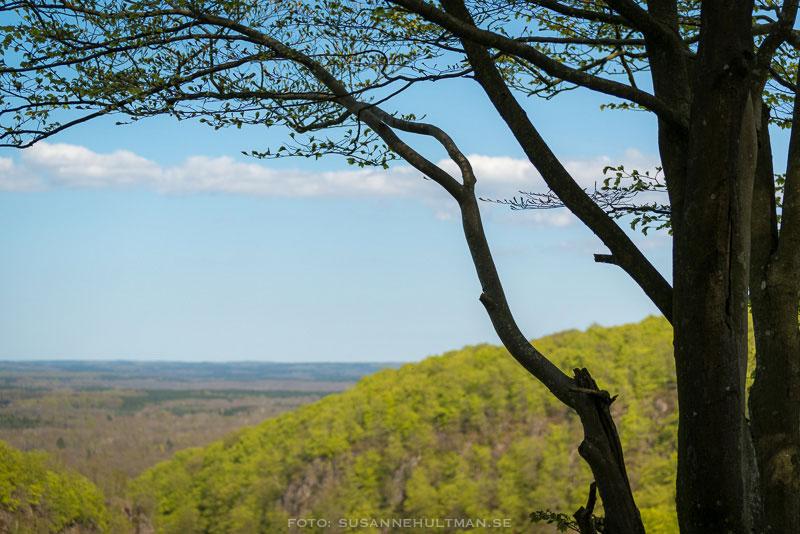 Träd som ramar in utsikten över Söderåsen