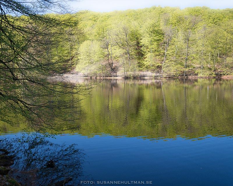 Blå sjö och grön bokskog