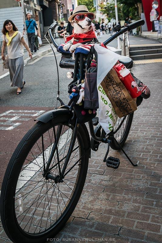 Utklädd hund på cykel