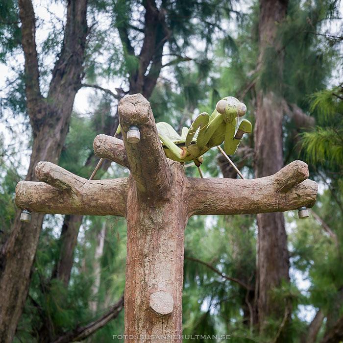 Skulpur av en gräshoppa på en pelare