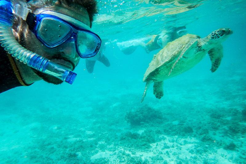 Oliver med havssköldpadda
