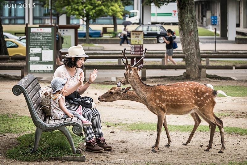 Rådjur tigger mat av personer på bänk.