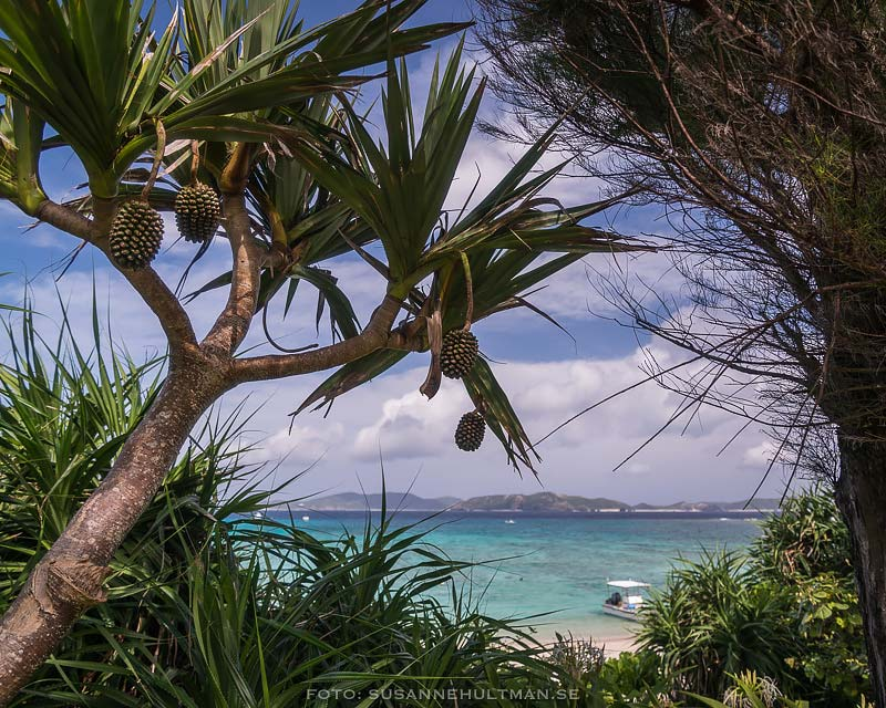 Strand omgiven av växter