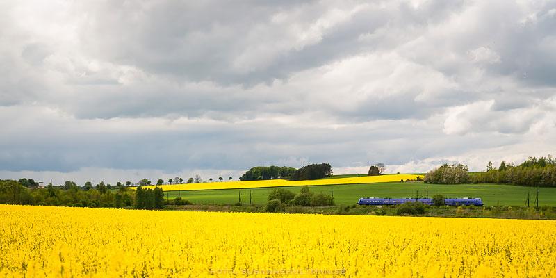 Pågatåg i gult landskap