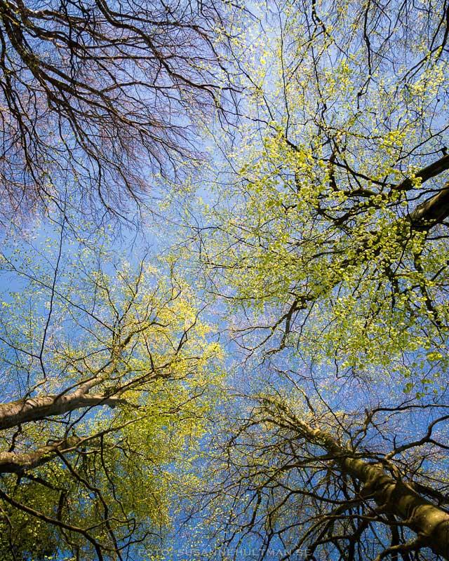 Bokar mot blå himmel