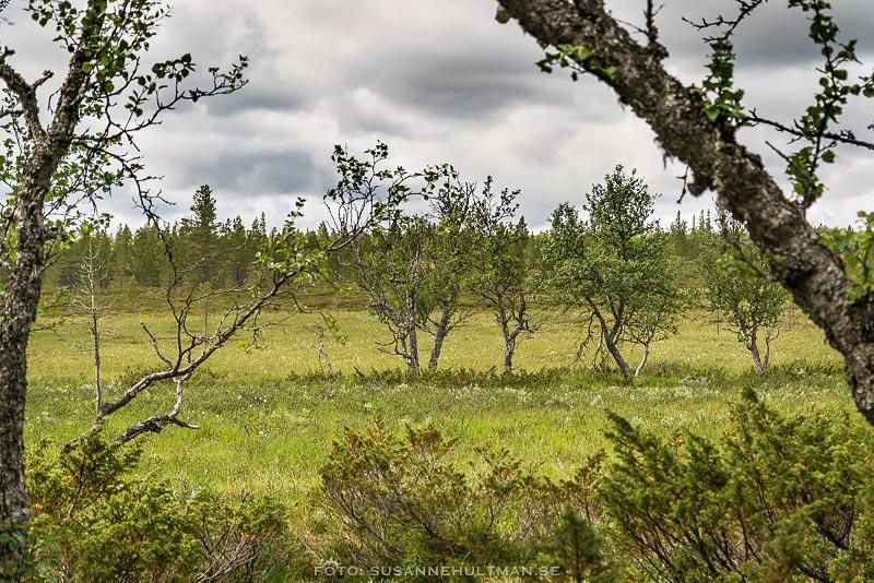 Träd på rad