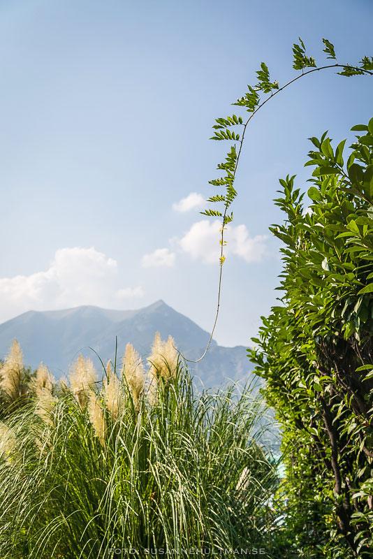 Alperna bakom grönska
