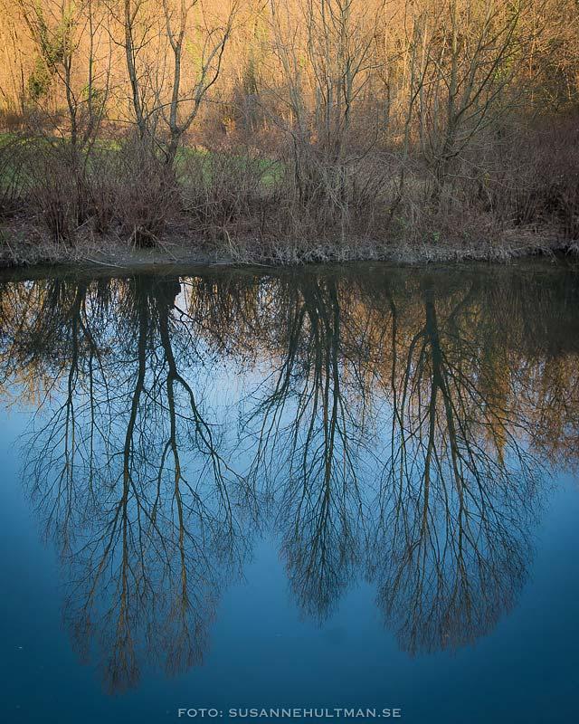 Kala träd speglas i vatten